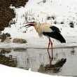 Stock Photo: Stork in its natural habitat