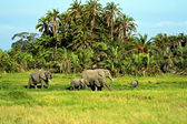 Amboseli elephants — Stock Photo