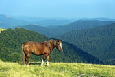 Horse on a background of mountain — Stock Photo