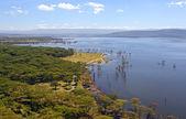 озеро накуру — Стоковое фото