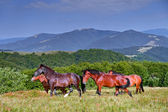 Horse on a background of mountain — Stok fotoğraf