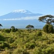 Kilimanjaro mountain — Stock Photo #46971561