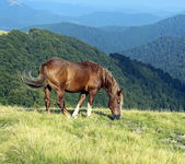 Horse on mountain — Stockfoto