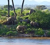Afrikanische elefanten — Stockfoto