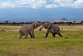 Kilimanjaro elephants — Foto Stock