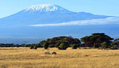 Panorama of the African savannah — Stock Photo