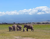 Kilimanjaro elephants — Stock Photo