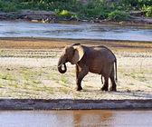 Kilimanjaro elephants — Stock Photo