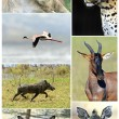 African wild animals — Stock Photo #51477397