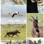 Постер, плакат: African wild animals