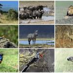 animales salvajes africanos — Foto de Stock