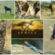 African wild animals — Stock Photo #51477461