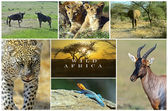 African wild animals — Stock Photo