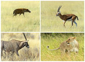 African savannah mammals in their natural habitat — Stock Photo