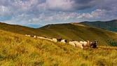 Travel along the ridge in summer — Stock Photo