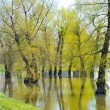 Flooded ground — Stock Photo