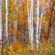 Colours of the autumn forest — Stock Photo #13646220