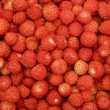 A scattering of wild strawberries — Stock Photo