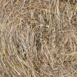 Hay — Stock Photo #40946063