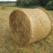 Straw in field — Stock Photo