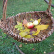 Apples and leaves in wicker - Stock Photo