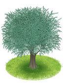 Zeytin ağacı — Stok Vektör