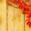 Autumn background,: grape red leaves, wooden texture — Stockfoto