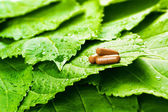 Pills over green leaves with water drops — Stock Photo