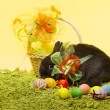 Easter bunny rabbit, Easter basket eggs over decoration yellow background — Stock Photo #43192029