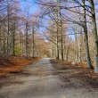 Dirt road in a beech wood in early spring — Stock Photo