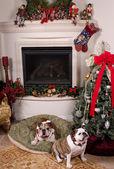 время рождества — Стоковое фото