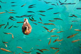 Duck of fish - Lake Plitvice — Stock Photo