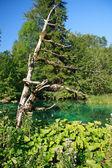Parque nacional de plitvice — Foto de Stock