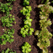 Vegetable garden — Stock Photo #14161799