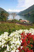 Flower garden in Faggeto Lario — Stock Photo