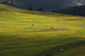 Pastures to Prato Piazza — Stock Photo