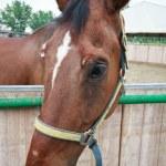 Horse — Stock Photo #31309369
