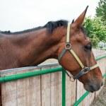 Horse — Stock Photo #31309385