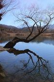Piano de lac (val menaggio) — Photo