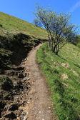 Chemin d'accès vers la montagne bolettone — Photo