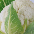 Cauliflower closeup — Stock Video #14761115