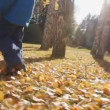 Young boy walks in autumn park — Stockvideo
