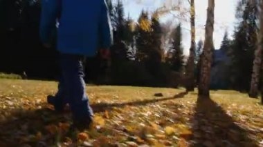 Young boy walks in autumn park — Stock Video