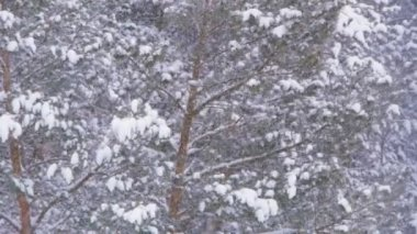 Winter landscape with snow in forest — Video Stock