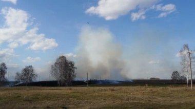 Smoke from burning grass — Stock Video