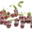 Group of shiny cherries. Selective focus. — Stock Video