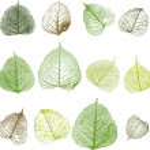 Vector leafs — Stock Vector