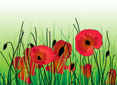 Poppies in the grass — Stock Vector