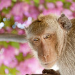Stock Photo: HuHin Monkey 08