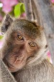 Hua Hin Monkey 07 — Stock Photo